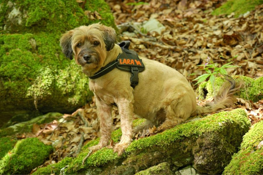 Benefits of using a harness for your dog instead of neck collars